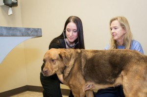 clifton hollow animal hospital (13)