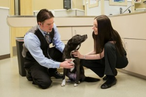 clifton hollow animal hospital (6)